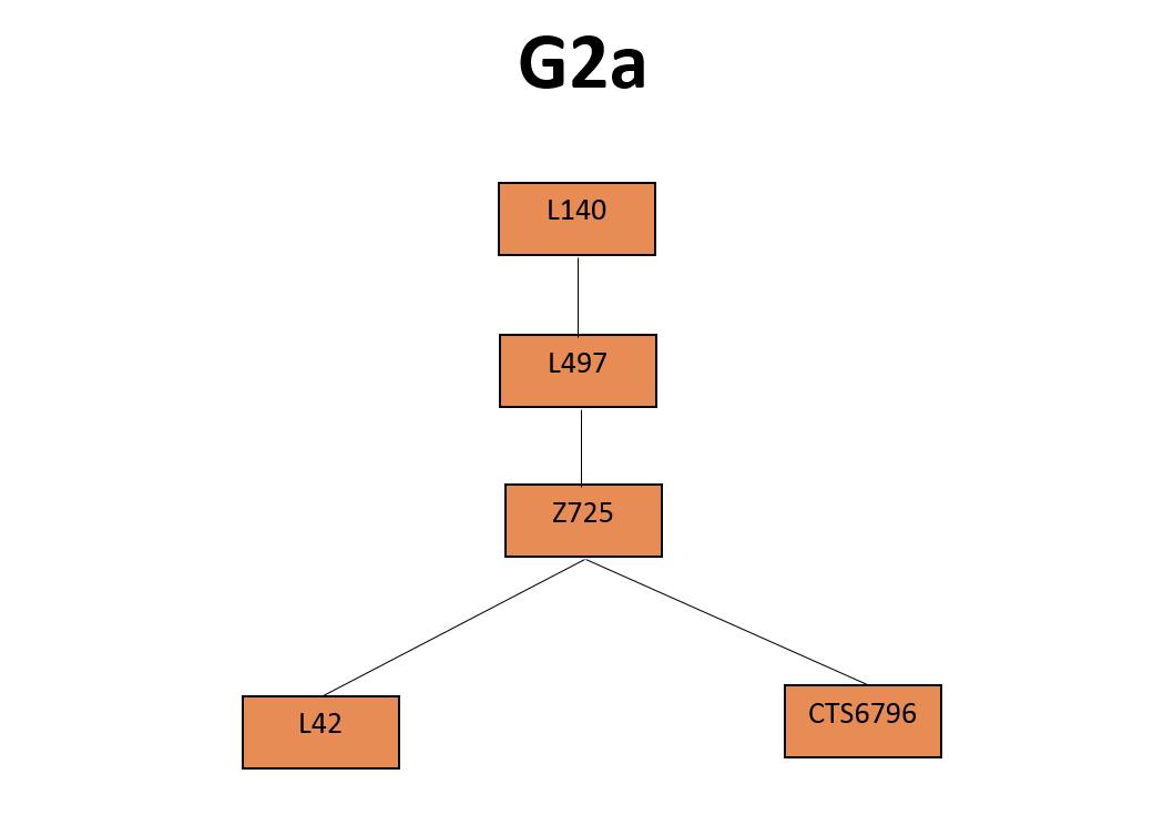 G2a SNPtree