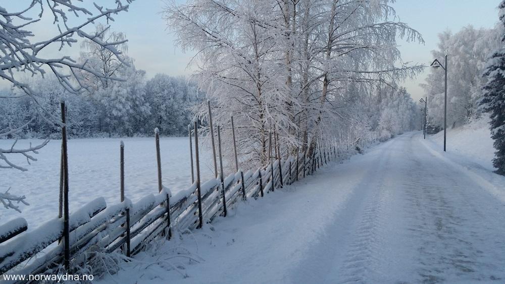 Skigard snø2