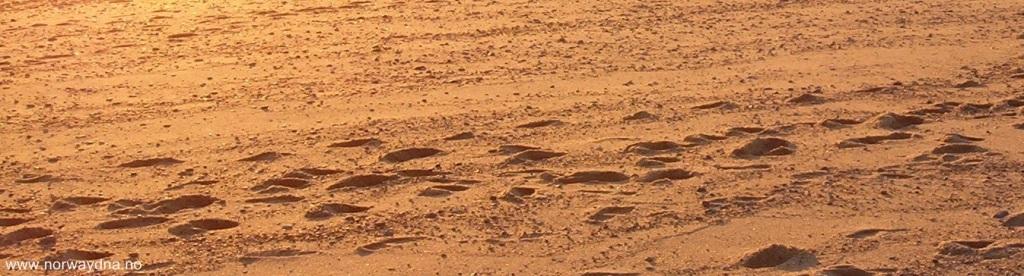 Desert sand sunset t