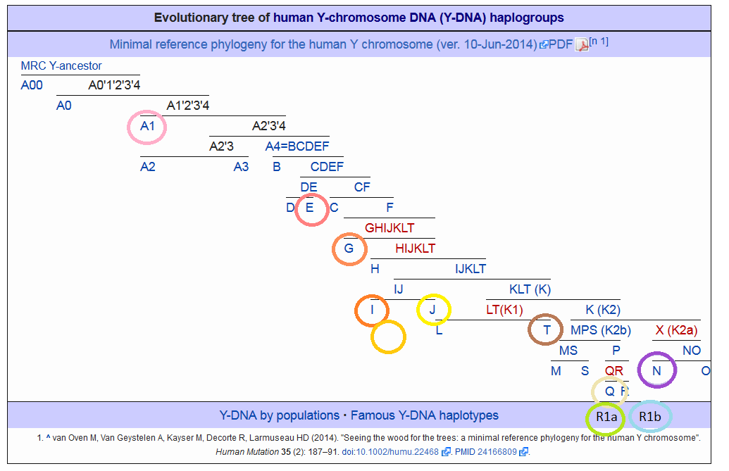 Y-haplogroups
